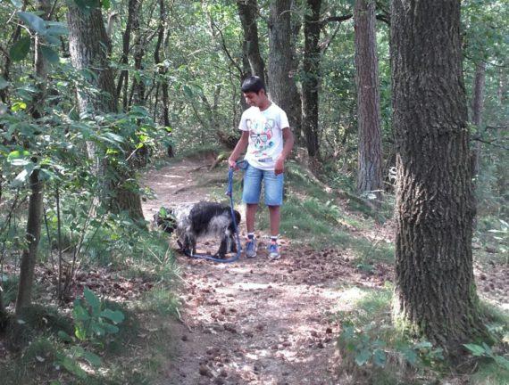 Vijf redenen om een weekend weg met hond te plannen