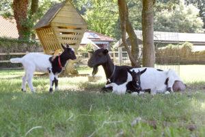 Kinderboerderij Veluwe