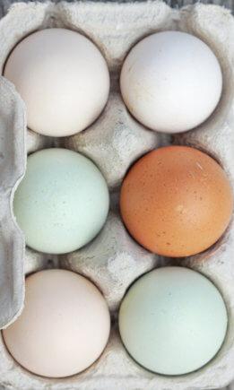 Ecologische eieren