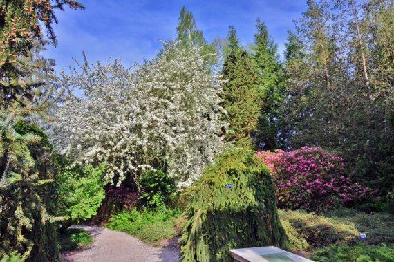 Prachtige wandeling in Nationaal Bomenmuseum Gimborn